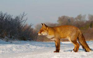 охота с луком в беларуси