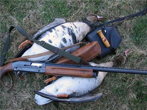 охота на гусей в беларуси