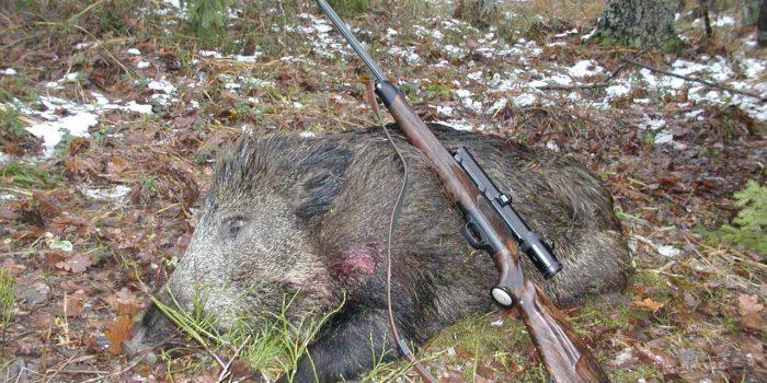 Охота в Беларуси, охота в белоруссии, охота на кабана в Белоруссии Беларуси, охота на лося в Белоруссии Беларуси, Охота в Беларуси, охота в белоруссии, охота на кабана в Белоруссии Беларуси, охота на лося в Белоруссии Беларуси