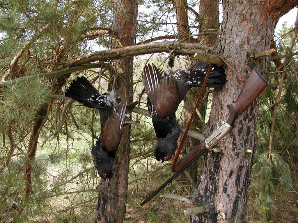 Capercaillie hunting in Europe