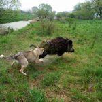 driven hunt in Belarus