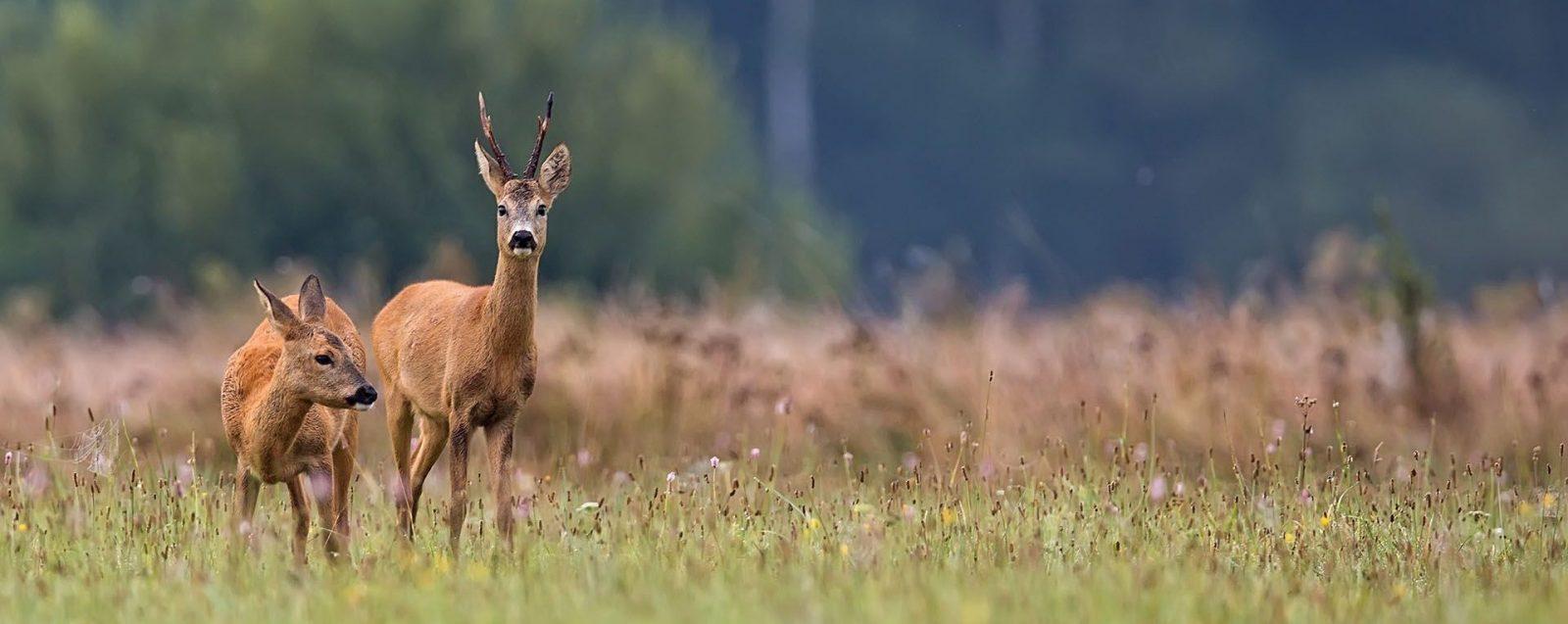Охота в Беларуси.