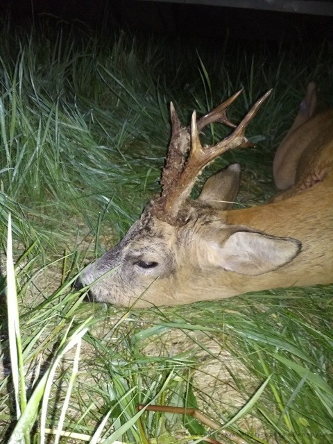 охота на косулю в белоруссии