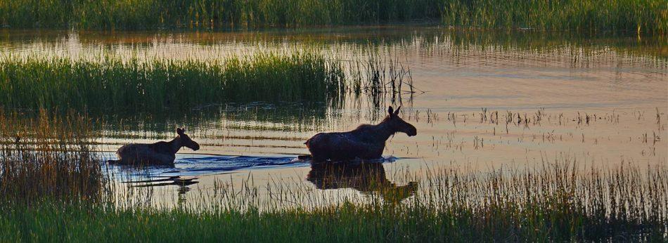 Охота в Беларуси | Охота на косулю в Белоруссии