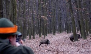 driven hunt Belarus