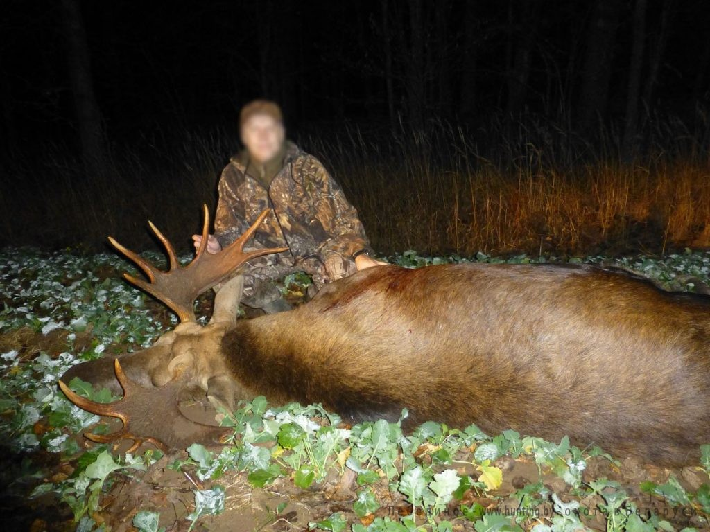moose hunting in belarus